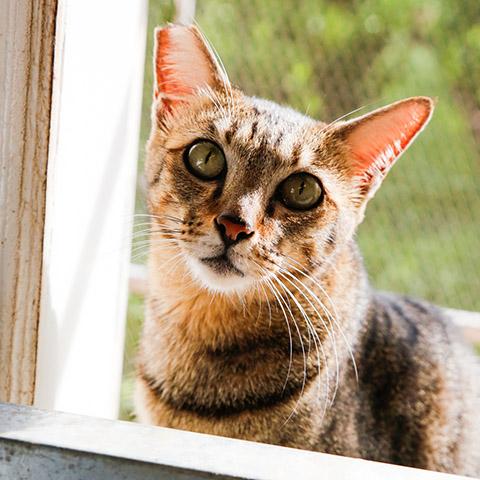 Adopt Lucy   Cat Adoption Vietnam Animal Aid and Rescue