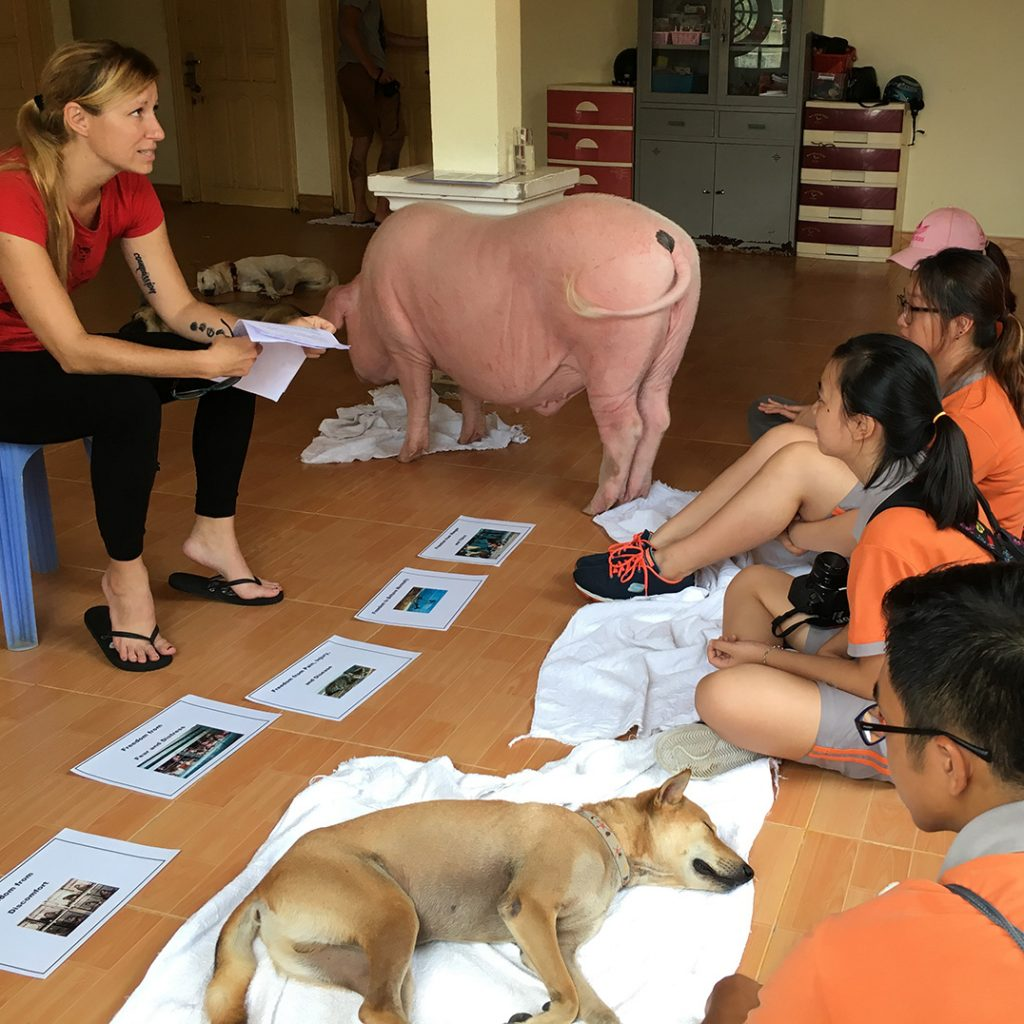 Education Projects | Vietnam Animal Aid & Rescue