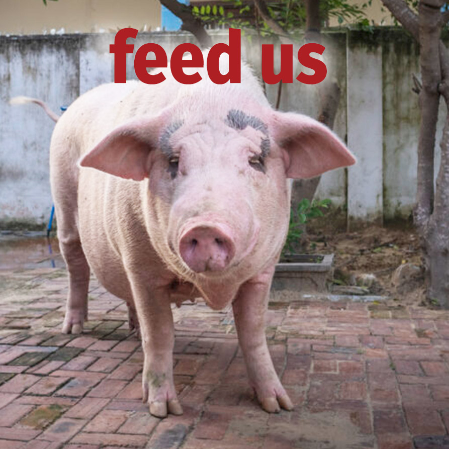 Sponsor an Animal | Vietnam Animal Aid and Rescue