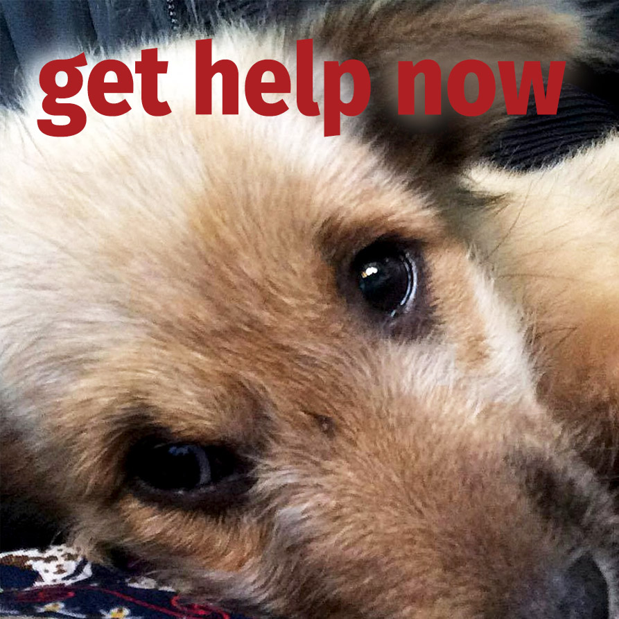 Get help for an animal now | Vietnam animal aid and rescue