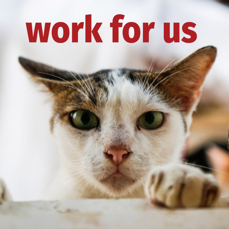 Jobs at Vietnam Animal Aid and Rescue
